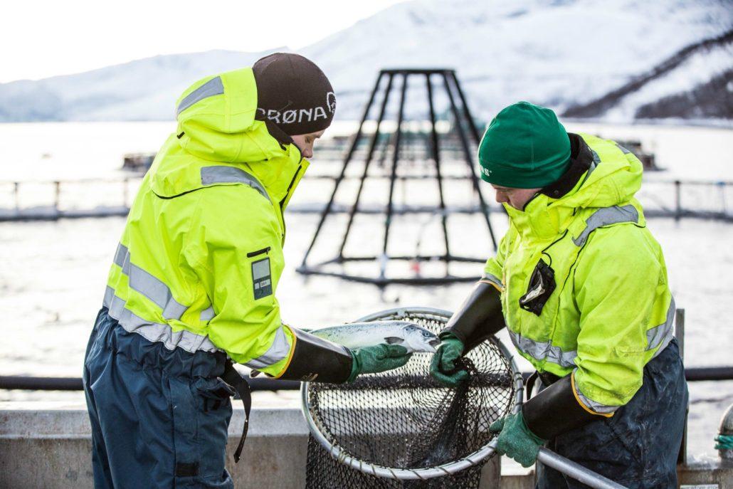 Norwegian - Salmon - Trout - VAP salmon - ASC - Seafood - Fish Farmers - Global Gap